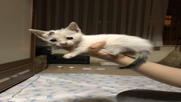 1 buçuk aylık erkek yavru kedi sahiplendirme