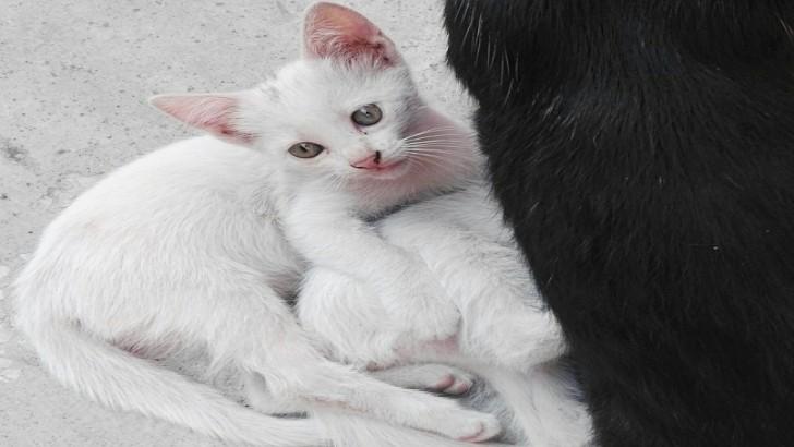 Birlikte daha mutlu olabiliriz (yavru kedi)