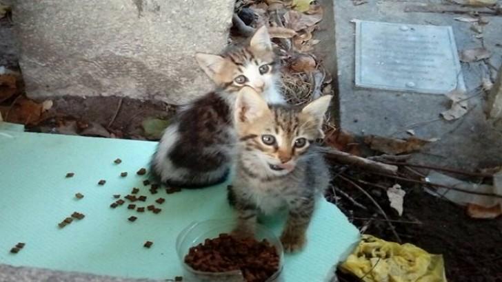 Eyüp'te annesiz yavru kedilere yuva arıyorum. Yagmurlar baslamadan sokakta yasıyorlar