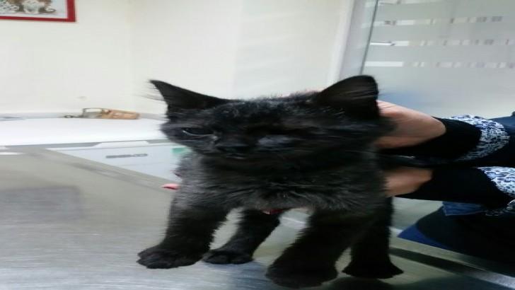 kara güzellik acil yuva arıyor (yavru kedi)
