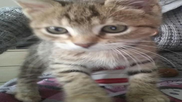 Acil Yuva (Yavru Kedi)