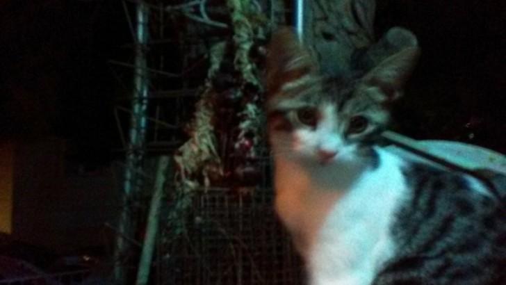 5 aylık yavru kediye yuva arıyoruz.