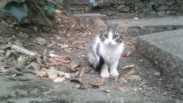 Yavru kedi iç dış parazit yapıldı, tırnakları kesildi 2aylık dişi, kuma alışık insancıl
