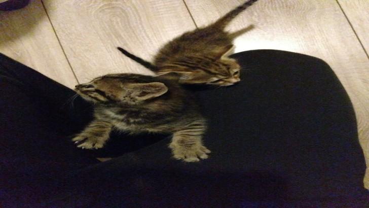 İki minik yavru