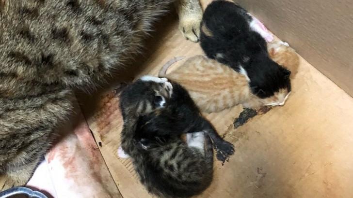 Yavrular ve anneye 18OCAK-4ŞUBAT geçici veya kalıcı yuva arıyoruz Mama ücreti karşılanacak