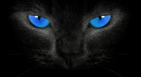 Siyah (Kara) Kedi Cinsleri