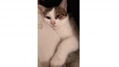 Artur – dünya tatlısı kediciğimiz