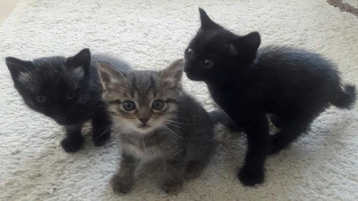 2 aylık yavru kediler