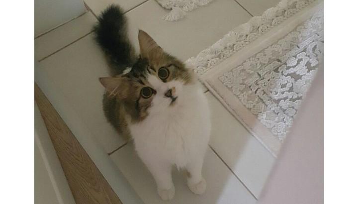 Sokakta Hastayken İyileştirdiğimiz Dişi Kedimize Yuva Arıyoruz