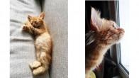 Kedimi Sahiplendiriyorum
