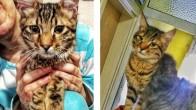 Yavru Kedi Sahiplendirme Bursa