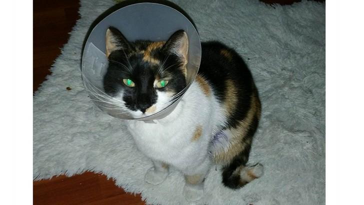 sokaktaydı yaralanmıştı :(