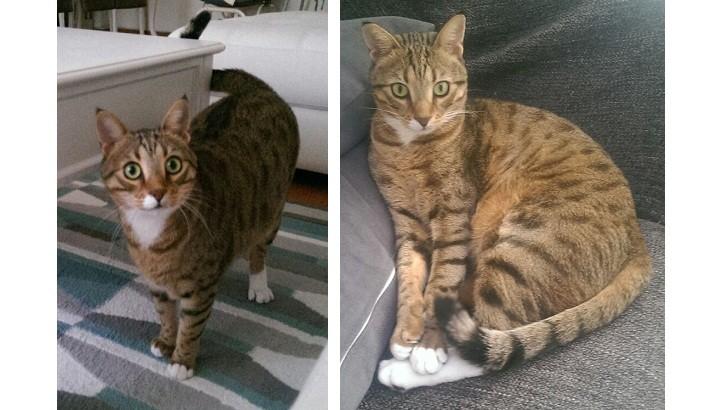 Yakışıklı ve akıllı kedimize yuva arıyoruz