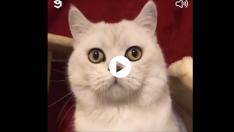 Duyduğu sese ne yapacağını şaşıran kedicik :)
