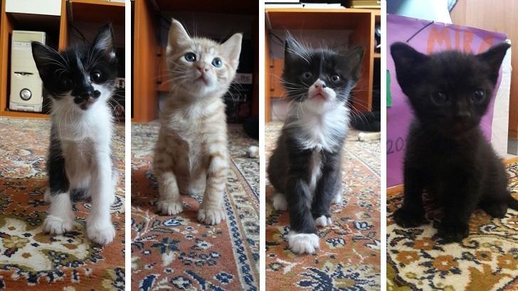 Minik Afacanlar – Sakarya Yavru Kedi Sahiplendirme