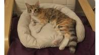 Tarçın – İstanbul Kedi Sahiplendirme