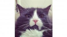 Sakin, zeki kedime iş seyahatlerimin fazla olmasından dolayı yuva arıyorum