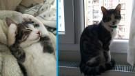 Kedimiz karpuzu sahiplenirmek istiyoruz