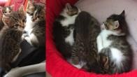 Tatlı mı tatlı 3 yavru kedi