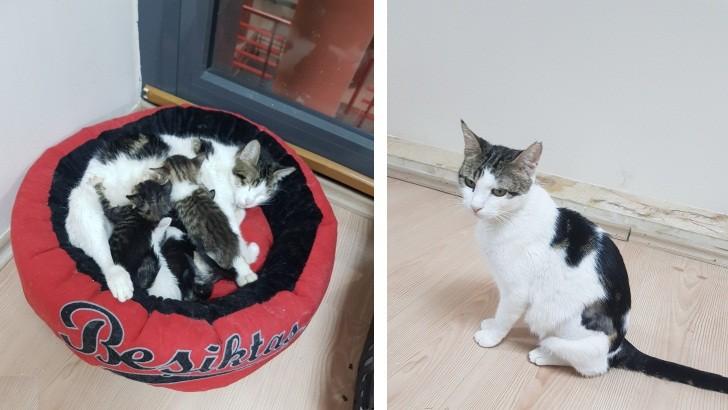 Uysal, Sessiz Anne Kedi ve Yavruları
