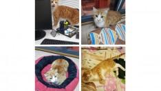 Evcimen, sevgi arsızı sarman kedi :)