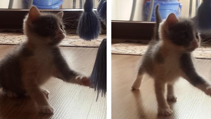 Bir ay 10 günlük yavru kedi minnoşumuz için yuva arıyoruz