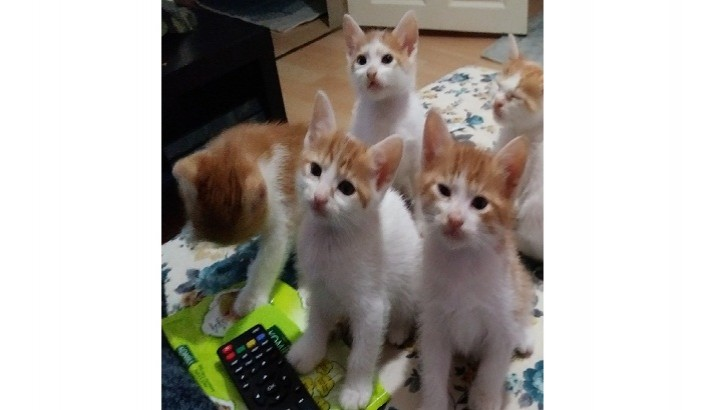 anne çalı kedi 6 yavrusuna ömürlük yuva arıyor
