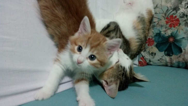 pendikte 2 aylık sarmal yavru kedi ve tekir anne
