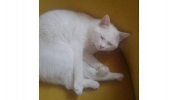 Kedimizi geçici veya kalıcı sahiplendiriyoruz