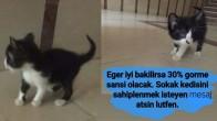 1 AYLIK YURI YE EV ARANIYOR