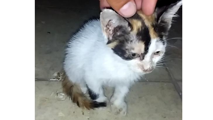Ücretsiz sevimli bir kedicik