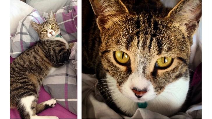 2 yaşındaki asil kızıma kedisi olmayan bir ev arıyoruz