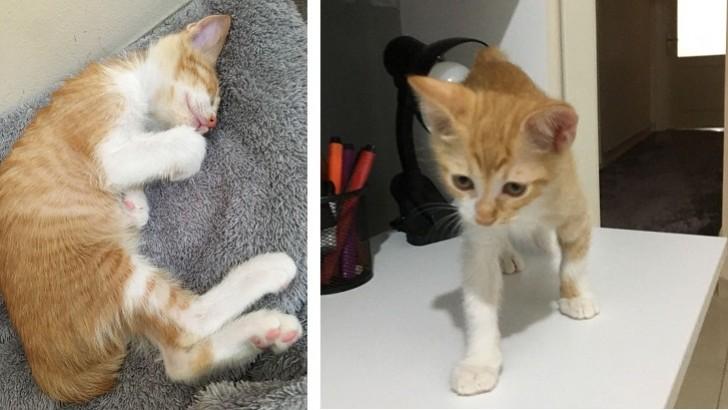 2 aylık dünyalar tatlısı kedimize yuva arıyoruz!