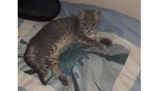 5 aylık kedimize yuva arıyoruz.