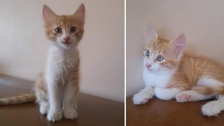 2 aylık erkek kedilerimize ömürlük güzel bir yuva arıyoruz