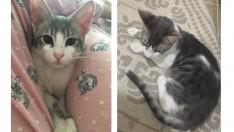 5 aylık erkek kedimize yuva arıyoruz
