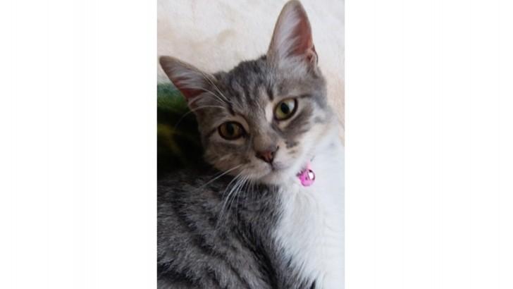6,5 aylık Dişi kedi