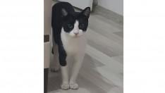 Kedim Ponçik Kayıp Acill