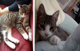 İstanbul'da 4 aylık kedi yuvasını arıyor