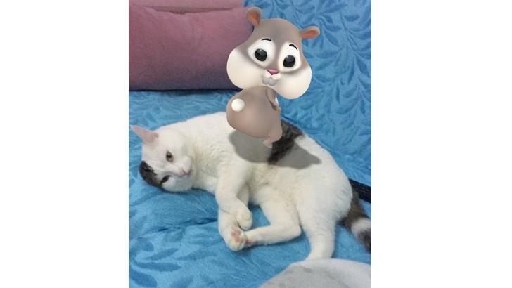 Geçici kedi sahiplendirme