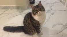 6 Aylık Pufuduk Erkek Kedi – İstanbul