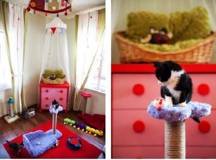 kedi odası