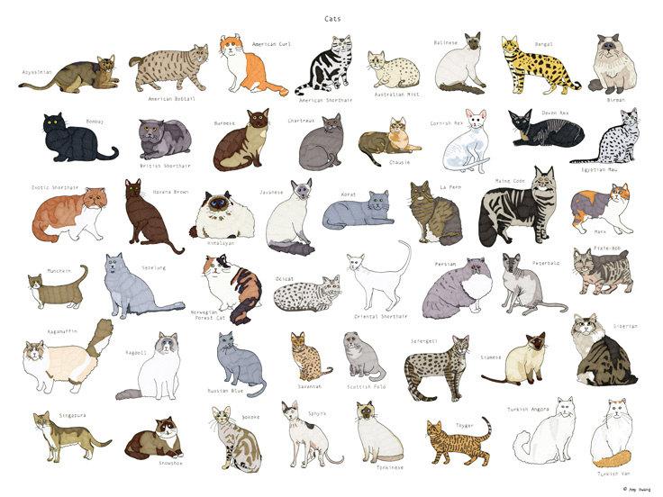 можно все кошачьи список с картинками угрозой