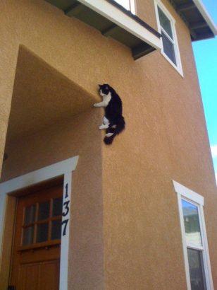 Kendini Arıyorken Olmaktan Korktuğu Yerde Olan 21 Kedi
