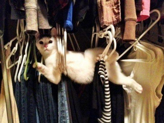 Orada Ne Yaptığı Anlaşılamayan 23 Kedi