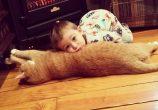 Çifte Minnoşluk: Terk Edilen Bir Kedi ve Küçük Bir Çocuğun Yürek Isıtan Dostluğu!