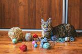 Engellerine ve Hastalıklarına Meydan Okuyup Hayata Sıkı Sıkıya Tutunan Sevimli ve Cesur Yürekli Kediler