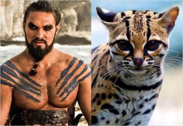 Kediler Dünyasında 18 Game Of Thrones Oyuncusu