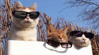 Kedilerin Nevi Şahsına Münhasır Mantığını Bir Çırpıda Ortaya Koyan 19 Sevimli Görsel