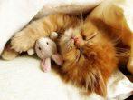 Sevimlilik Patlaması! 98 Kedi ve Sempatik Oyun Arkadaşları